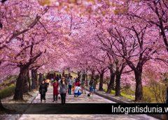 Beberapa Hal Gratis di Seoul Korea Selatan